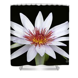Wonderful White Water Lily Shower Curtain by Sabrina L Ryan