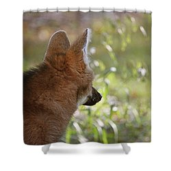 Wondering Wolf Shower Curtain by Karol Livote