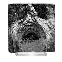 Wood You Smile  Shower Curtain by Trish Hale
