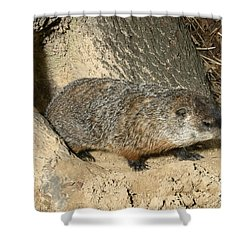 Woodchuck Shower Curtain by Ted Kinsman