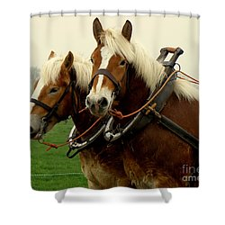 Work Horses Shower Curtain by Lainie Wrightson