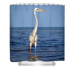 Wurdemann's Heron Shower Curtain