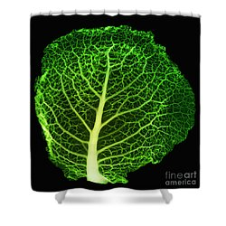 X-ray Of Cabbage Leaf Shower Curtain by Ted Kinsman