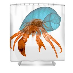 X-ray Of Hermit Crab Shower Curtain by Ted Kinsman