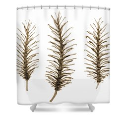 X-ray Of Pine Cones Shower Curtain by Ted Kinsman