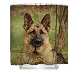 Yahtzee - German Shepherd Shower Curtain by Sandy Keeton