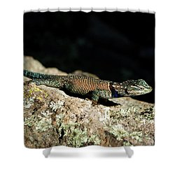 Shower Curtain featuring the photograph Yarrow's  by Vicki Pelham