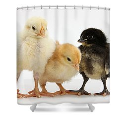 Yellow And Black Bantam Chicks Shower Curtain by Mark Taylor