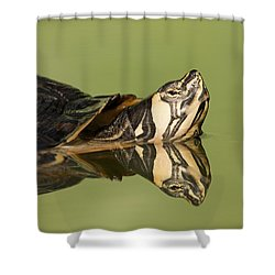 Yellow-bellied Slider Trachemys Scripta Shower Curtain by Ingo Arndt
