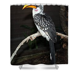 Shower Curtain featuring the photograph Yellow-billed Hornbill by Kathy  White
