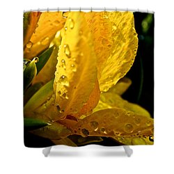 Yellow Canna Lily Shower Curtain by Susan Herber