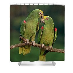 Yellow-crowned Parrot Amazona Shower Curtain by Thomas Marent