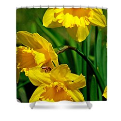 Shower Curtain featuring the photograph Yellow Daffodils And Honeybee by Kay Novy
