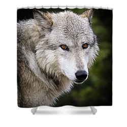 Shower Curtain featuring the photograph Yellow Eyes by Steve McKinzie