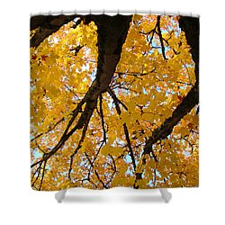 Yellow Fall Trees Prints Autumn Leaves Shower Curtain by Baslee Troutman