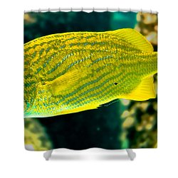 Yellow Fellow Shower Curtain by DigiArt Diaries by Vicky B Fuller