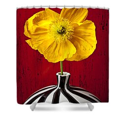 Yellow Iceland Poppy Shower Curtain by Garry Gay