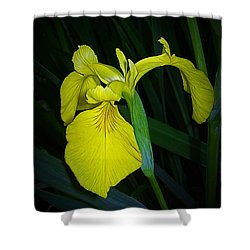 Yellow Iris Shower Curtain by Judi Bagwell