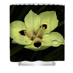 Yellow Iris With Rain Drops Shower Curtain