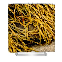 Yellow Kelp Shower Curtain by Brent L Ander