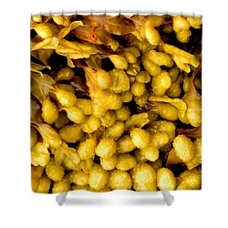 Yellow Kelp Pods Shower Curtain by Brent L Ander