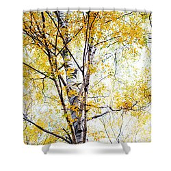 Yellow Lace Of The Birch Foliage  Shower Curtain by Jenny Rainbow