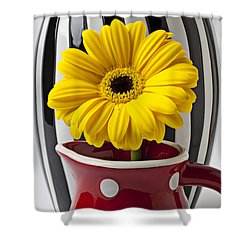 Yellow Mum In Pitcher  Shower Curtain by Garry Gay