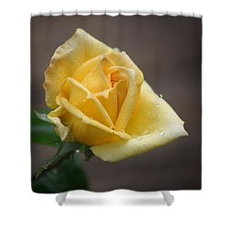Shower Curtain featuring the photograph Yellow Rose Of Texas by Donna  Smith