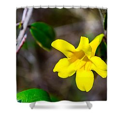 Shower Curtain featuring the photograph Yellow by Shannon Harrington