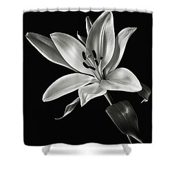Shower Curtain featuring the photograph Yellow Tiger Lily In Black And White by Endre Balogh