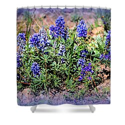 Yellowstone Lupine Blue Shower Curtain by Carol Groenen