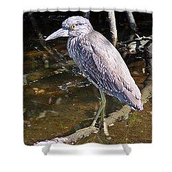 Yelow-crowned Night Heron 1 Shower Curtain by Joe Faherty