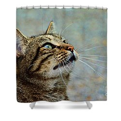 Yes I Am A Pretty Kitty Shower Curtain by Debbie Portwood