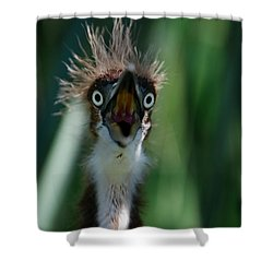 Yikes Shower Curtain by Skip Willits