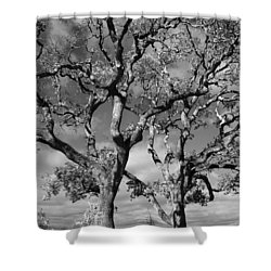 You Never Let Me Down Shower Curtain by Laurie Search