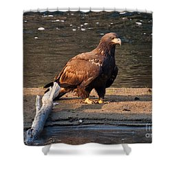 Young And Proud Shower Curtain by Cheryl Baxter