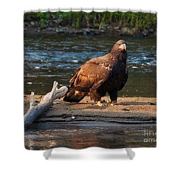 Young And Wise Shower Curtain by Cheryl Baxter