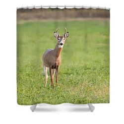 Shower Curtain featuring the photograph Young Buck by Art Whitton
