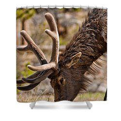 Shower Curtain featuring the photograph Young One by Colleen Coccia