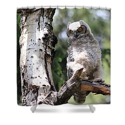 Young Owl Shower Curtain by Shane Bechler