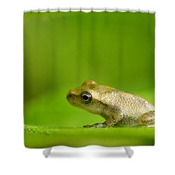 Young Spring Peeper Pseudacris Crucifer Shower Curtain by Steeve Marcoux