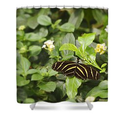 Zebra Butterfly Shower Curtain by Marianne Campolongo