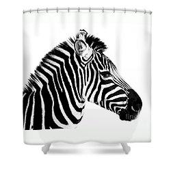 Zebra Shower Curtain by Rebecca Margraf