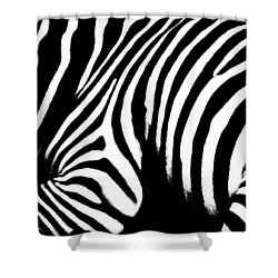 Zebra Stripes Shower Curtain