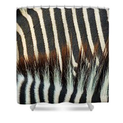Zebra Stripes Shower Curtain by Methune Hively