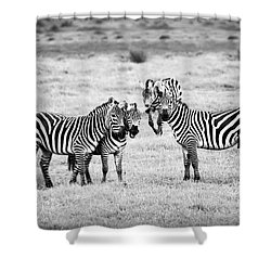 Zebras In Black And White Shower Curtain by Sebastian Musial
