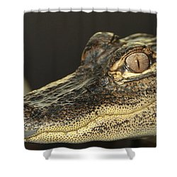 Al The Alligator Shower Curtain by Sean Allen