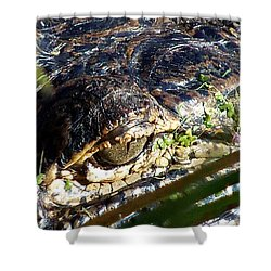 Shower Curtain featuring the photograph  Alligator Eye  by Chris Mercer