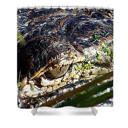Alligator Eye  Shower Curtain by Chris Mercer