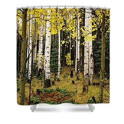 Aspen Grove In Upper Red River Valley Shower Curtain